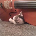 Cello playing Skiffle kitten!